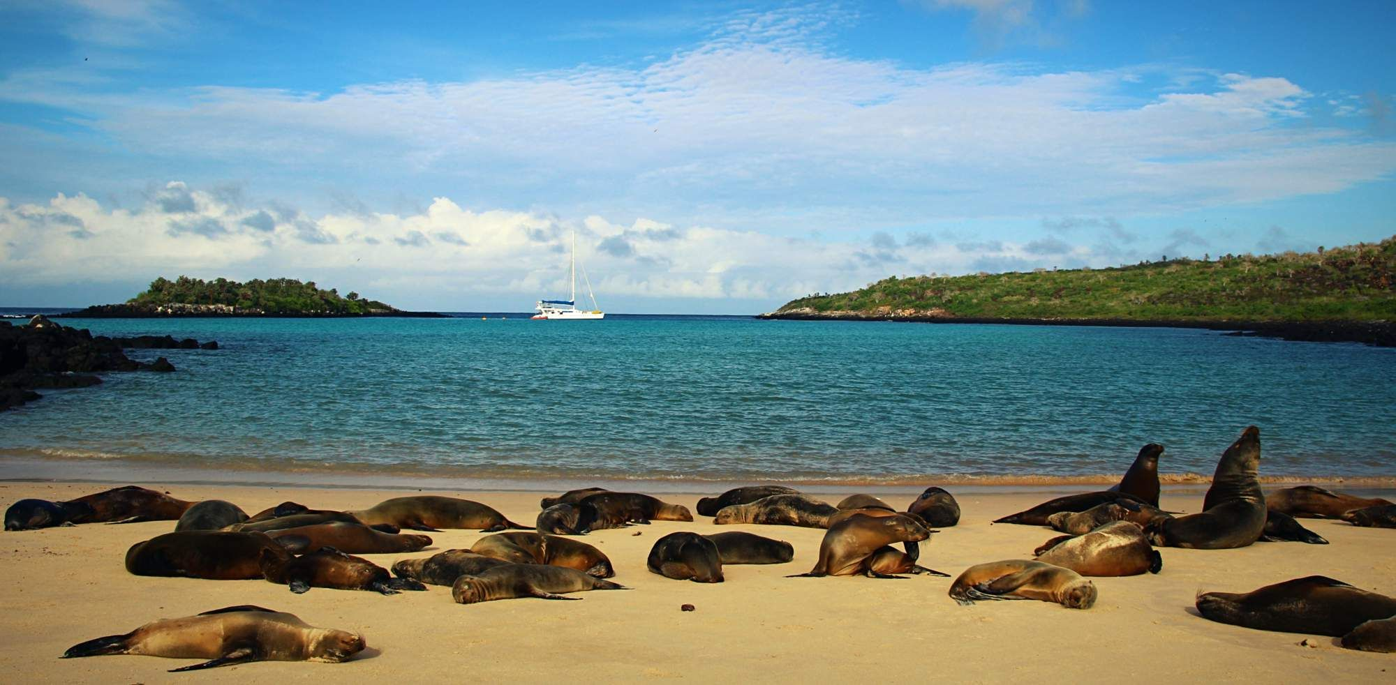 Galápagos - A Tale of Endemic Creatures and Seasickness